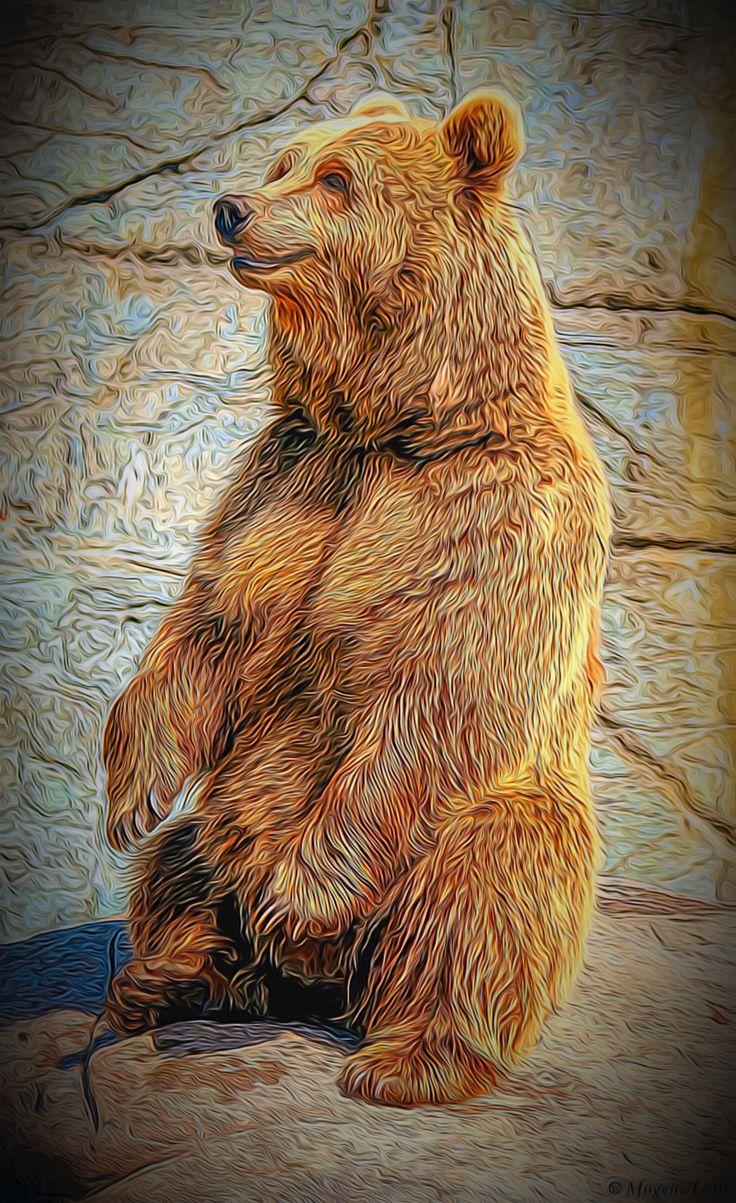 """A brown bear """"Art."""""""