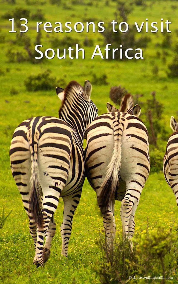 13 reasons to visit South Africa
