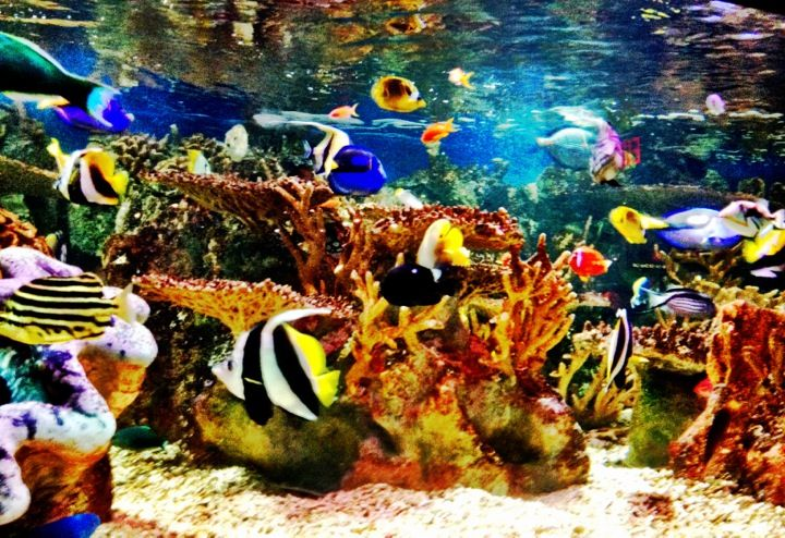 Checks out the thousands of colorful fish, Sea Lions and Fur Seals, 3 variety's of penguins, sea dragons, jellyfish and more at the New England Aquarium in Boston, MA! The also have the Simons IMAX Theatre on site as well! The New England Aquarium is also a Boston Duck Tour Duck Stop!