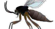 How to Kill Gnats?