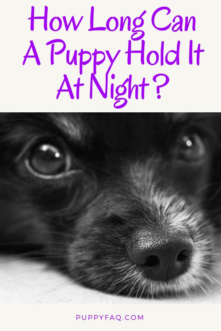 How Long Can A Puppy Hold It At Night Potty Training Puppy Puppies Puppy Training
