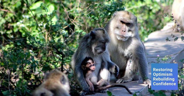 Cara Gambar Hewan Monyet Ini Alasan Mengapa Kita Dilarang Dan Tidak Seharusnya Memberi Langkah Langkah Menggambar Mo Hewan Gambar Hewan Hewan Peliharaan