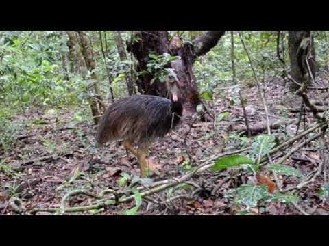 Animals of the Daintree Rainforest - YouTube