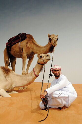 The best from around the world is in Dubai. http://www.dubaidesertsafaritours.com/