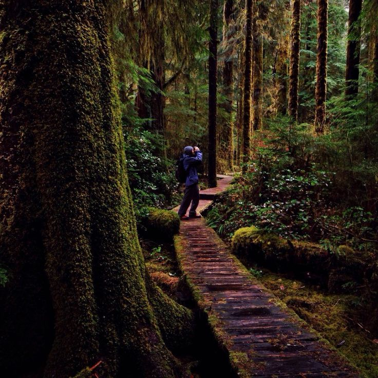 Hidden Hikes Around Vancouver Island, BC.   See more on the #exploreBC blog: http://blog.hellobc.com/hidden-hikes-on-vancouver-island-with-tomparkr/  (Photo: Carmanah Wahlbran Provincial Park by tomparkr via Instagram) #exploreBC #exploreCanada