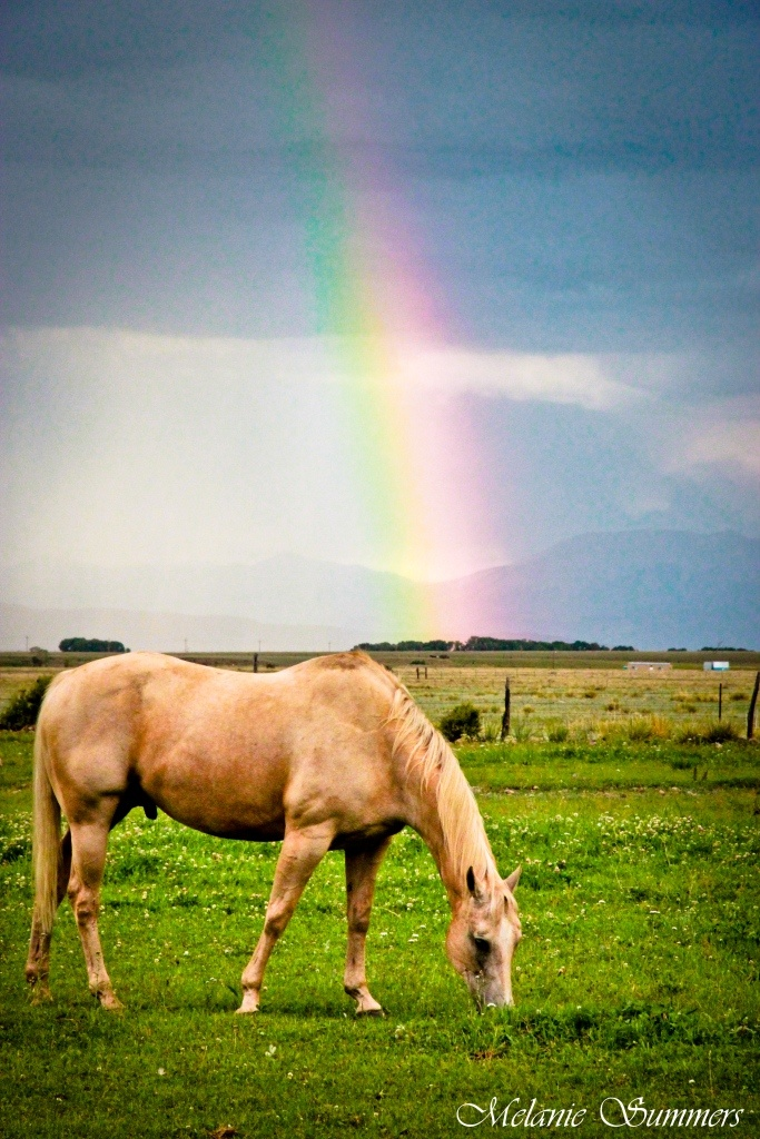 Palamino Horse with rainbow in Buena Vista, Colorado---soon this will be Brielle