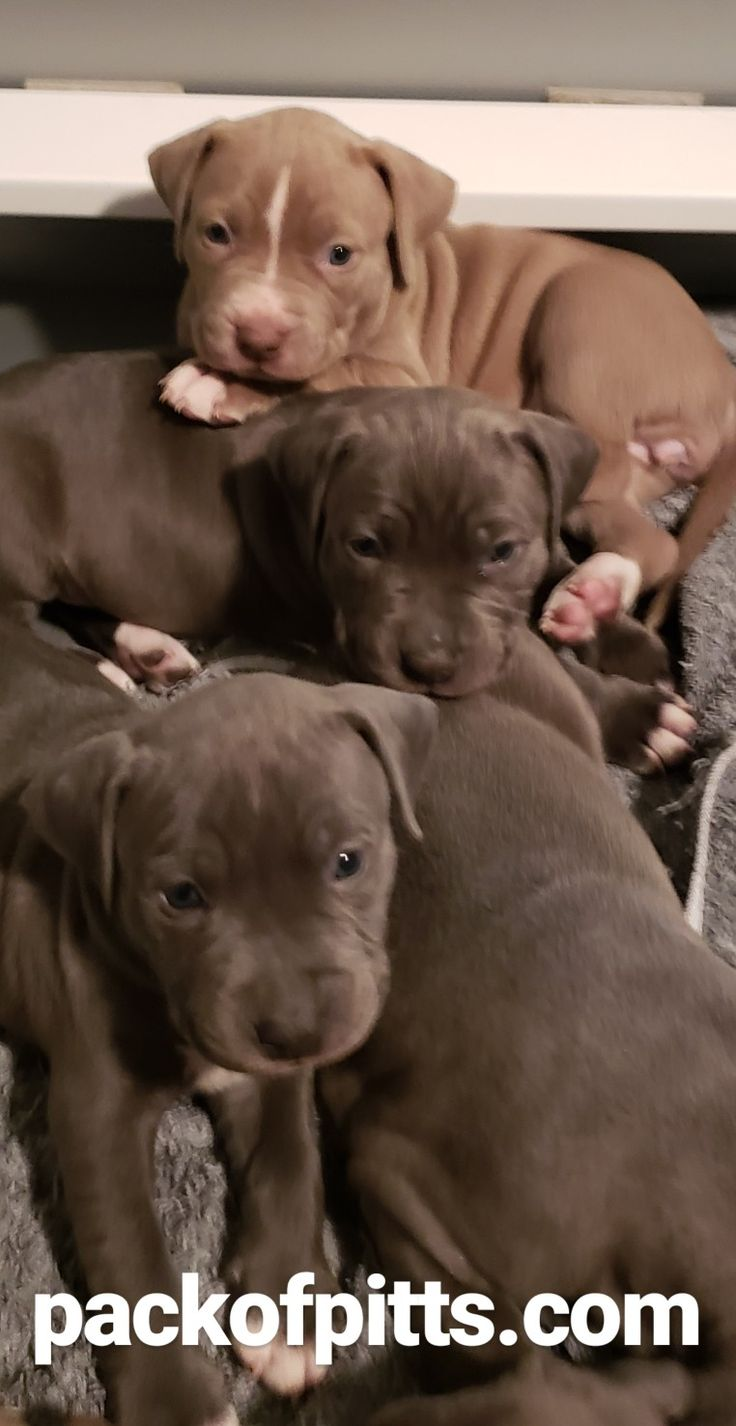 Trained puppies for sale ontario