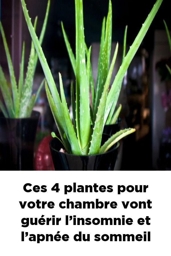 Ces four plantes pour votre chambre vont guérir l'insomnie et l'apnée du sommeil