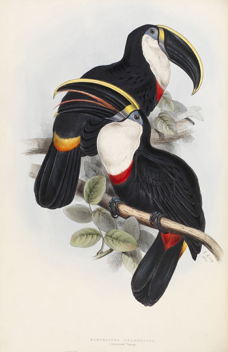 250 best vintage botanical u0026 entomological art images on pinterest