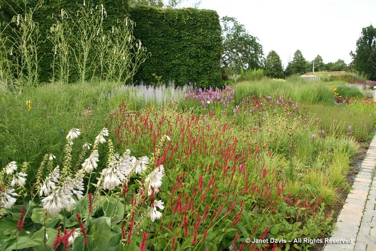 Die besten 25 hosta sieboldiana ideen auf pinterest for Piet oudolf pflanzen