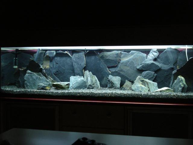 akwarium malawi oświetlenie - Szukaj w Google