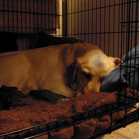 A COMPLETE and FREE guide to crate training, covering why and how to crate train a dog or puppy, during the day, overnight, even if you work full time.