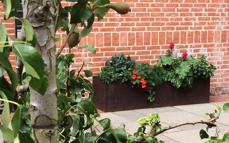 Folkestedets forhave - frugttræer & plantekumme