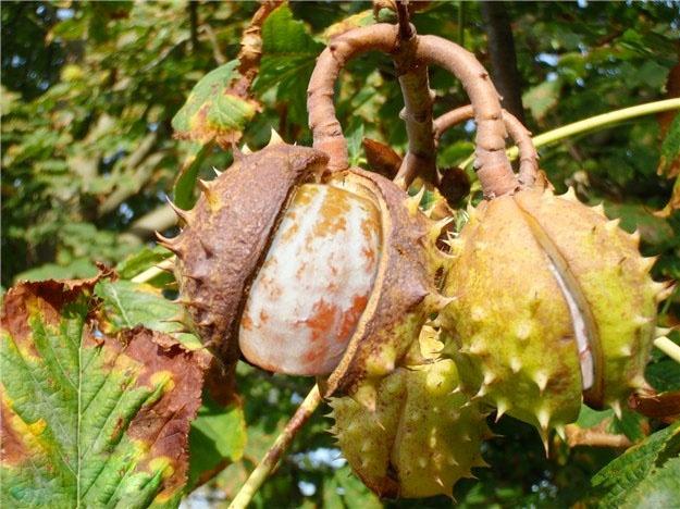 http://zipmanipulation.wordpress.com/  #hybrid #fruit #orange