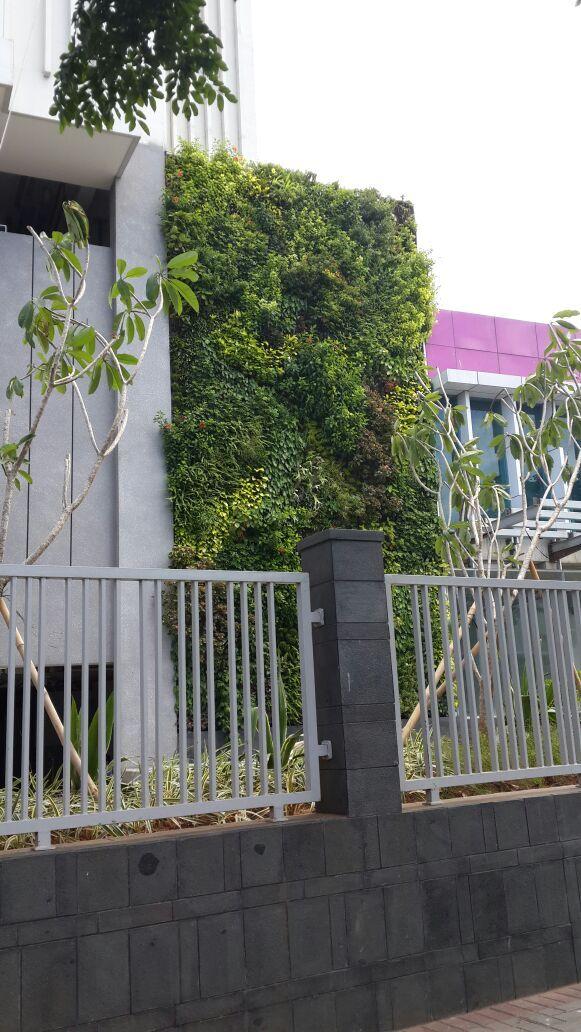 Vertical garden Indonesia/Taman Vertikal indonesia SKY TERRACE Daan Mogot Baru 0811-900-858 INDONETA adalah jasa pembuatan taman vertikal profesional berpengalaman mengerjakan vertical garden Patrick Blanc Perancis. www.indoneta.com