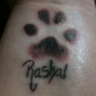 All information about Real Dog Paw Print - #catfactsblog
