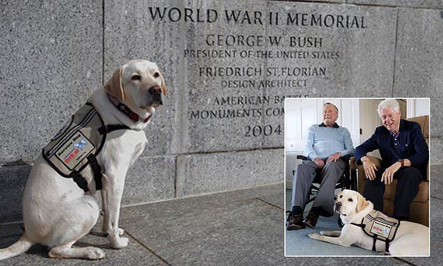 George H W Bush S Service Dog Sully Pays Tribute At Wwii Memorial