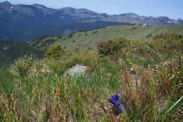 Rezervatia naturala Poiana Crucii este o arie protejată de interes național ce corespunde categoriei a IV-a (rezervație naturală de tip floristic) a organizației internaționale dedicată conservării resurselor naturale, Uniunea Internatională pentru Conservarea Naturii (IUCN)