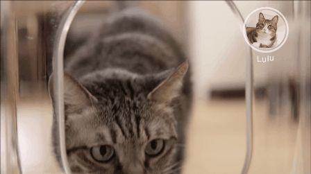 "<a href=""http://go.redirectingat.com?id=74679X1524629&sref=https%3A%2F%2Fwww.buzzfeed.com%2Fmallorymcinnis%2Fgadgets-galore&url=https%3A%2F%2Fwww.indiegogo.com%2Fprojects%2Fbistro-a-smart-feeder-recognizes-your-cat-s-face&xcust=https%3A%2F%2Fwww.buzzfeed.com%2Fmallorymcinnis%2Fgadgets-galore%7CBFLITE&xs=1"" target=""_blank"">Bistro — Face Recognizing Smart Cat Feeder</a>"