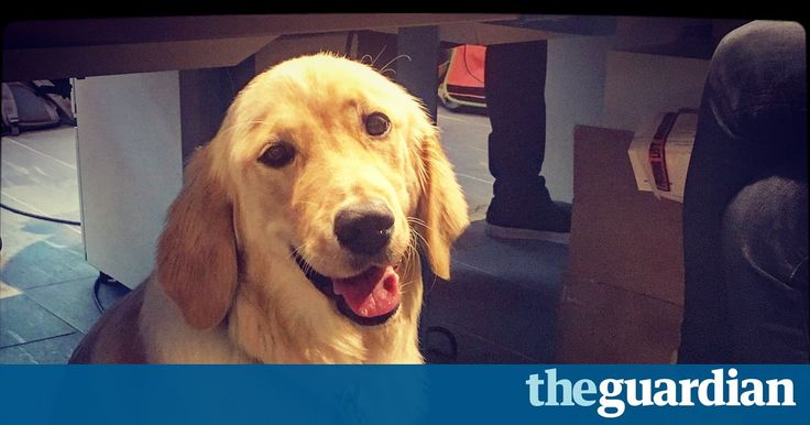 At Amazon, around 2,000 employees have registered their pets at its headquarters in Seattle so they can take them in – Read about more pet friendly workplaces  https://www.theguardian.com/lifeandstyle/2017/may/06/pet-dogs-are-the-new-must-have-accessory-at-the-smarter-office?utm_campaign=coschedule&utm_source=pinterest&utm_medium=Pawfection