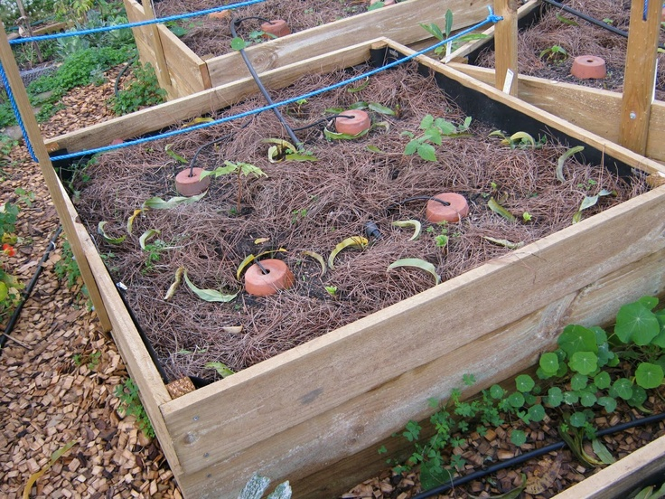 Diy Greywater Diy Deep Watering System Gardening Pinterest Farming Ideas Water Systems
