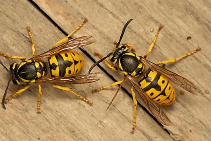 Trick Gegen Wespen In Garten In 2020 Wespe Thermomix Rezepte Thermomix