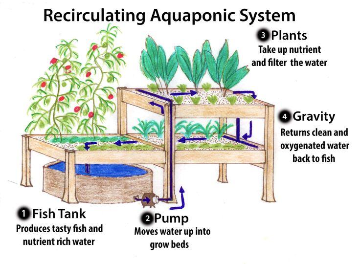 Victoria Aquaponics | Mason Street Farm
