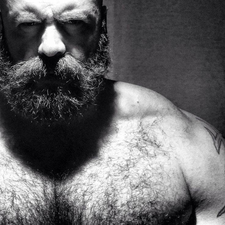 Bear gallery hairy man