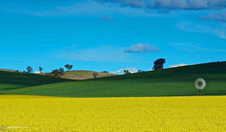 Canola field near Young, NSW. Look at those beautiful colours!