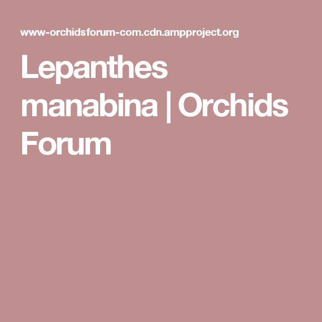 Lepanthes manabina   Orchids Forum