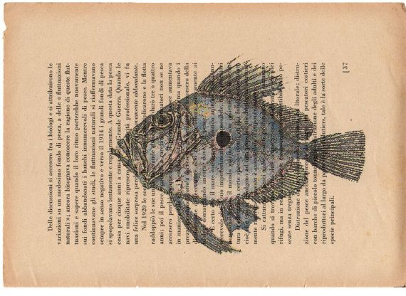 Pag.37 Pesce Sanpietro stampa in toni acquerello di StonesInLove