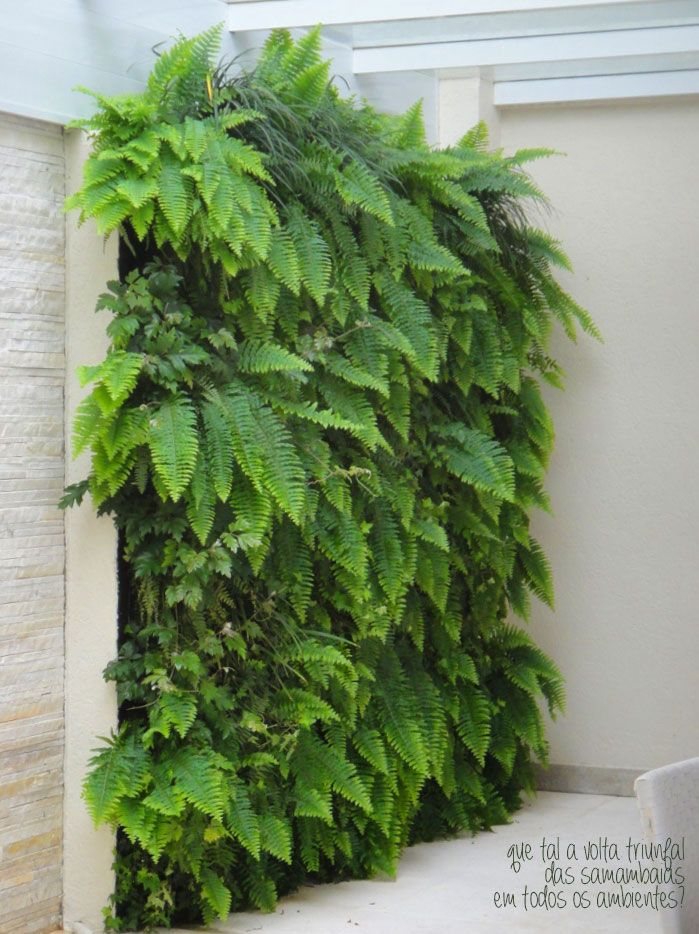 A vertical garden. Love this wall of ferns!
