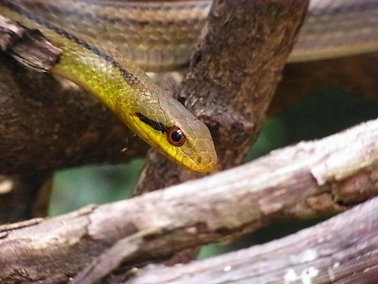 こんな所に蛇!