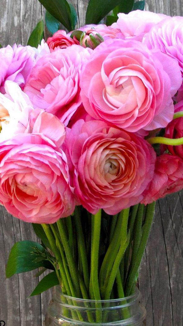 Die 243 Besten Bilder Zu Flores Fucsias Auf Pinterest | Gerber ... Schnittblumen Frische Strause Garten