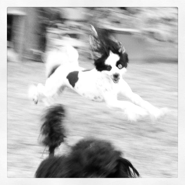Fly Like the WIND!!