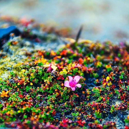 Арктические цветочки - 3