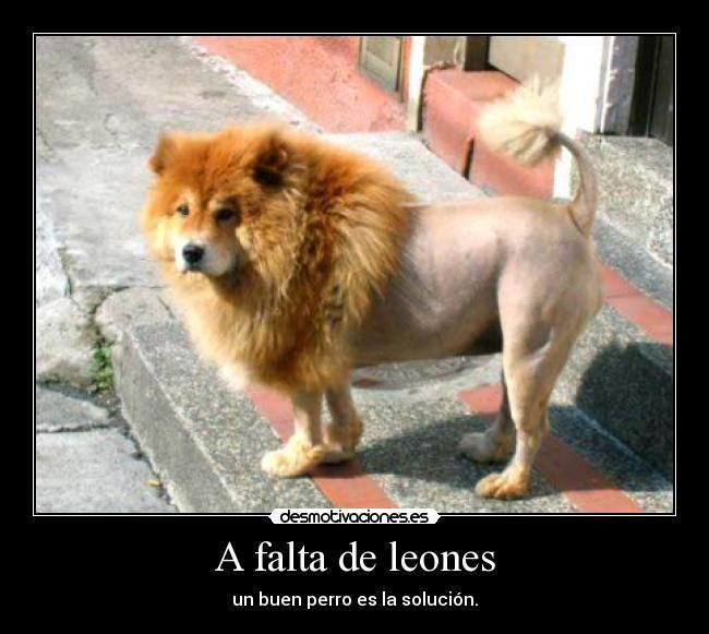 A Falta De Leones El Perro Leon Animals Dogs Funny