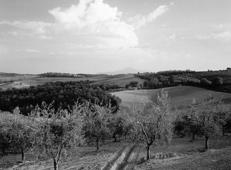 Carnaroliriset anses vara det bästa risottoriset. Riset odlas i norra Italien i distriktet