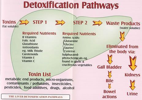 Google Image Result for http://life-enthusiast.com/condition/liver/images/detox_pathways2.jpg #LiverDetoxSymptoms