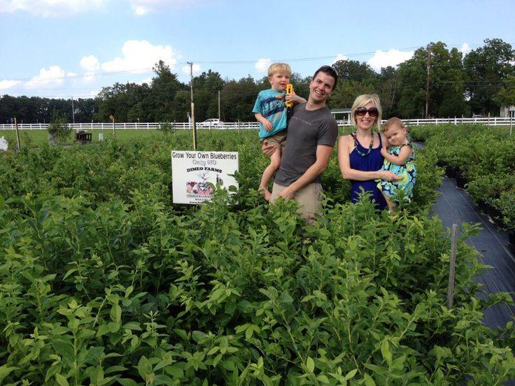 Blueberry Bushes for Sale - DiMeo Blueberry Farms & Blueberry Plants Nursery