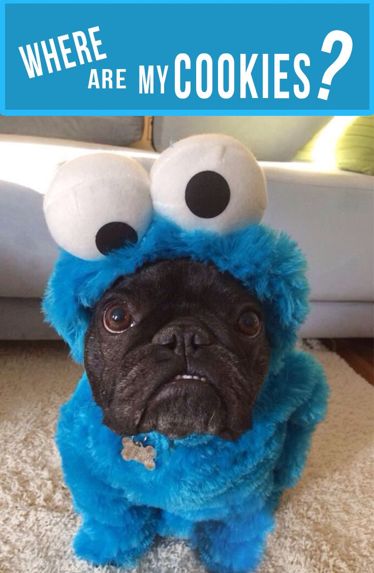 I want them all #CookieMonster #Bulldog #Costume