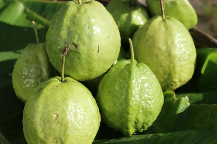 Trái ổi - Guava fruit