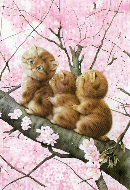 Muramatsu Cat 9--Not available by kyoto348, via Flickr