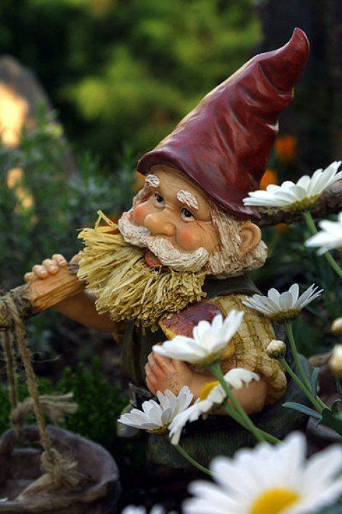 The definition, typology, and history of the garden gnome. Garden gnomes have had an unique history all over the world and continue to be a popular decoration of choice for lawns, garden, and homes.