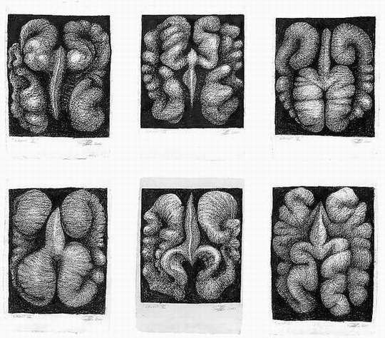 Peter Randall-Page - Walnuts 2000 'Walnut Drawings', charcoal on paper 105 x 72 cm