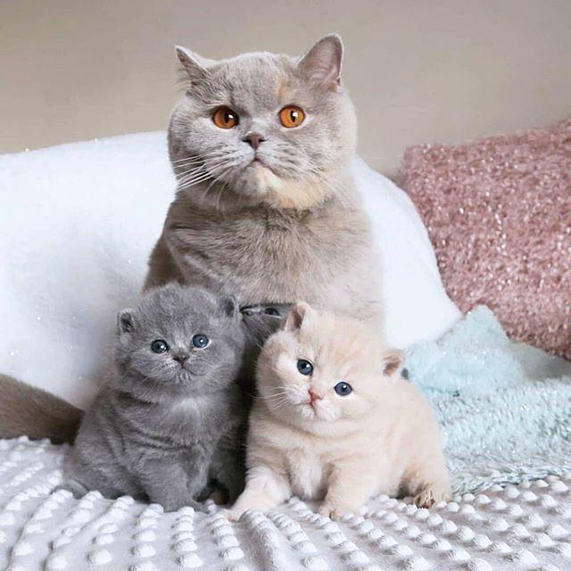 Crystalline Memoir Cute Cats Photos Cute Cats Pretty Cats