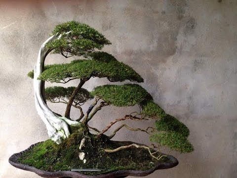 SHOW    BONSAI    EXHIBITION