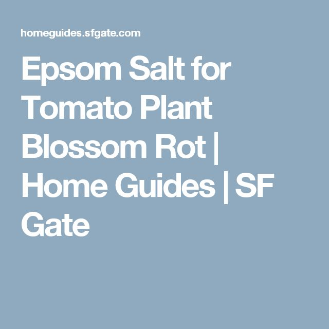 Epsom Salt for Tomato Plant Blossom Rot | Home Guides | SF Gate
