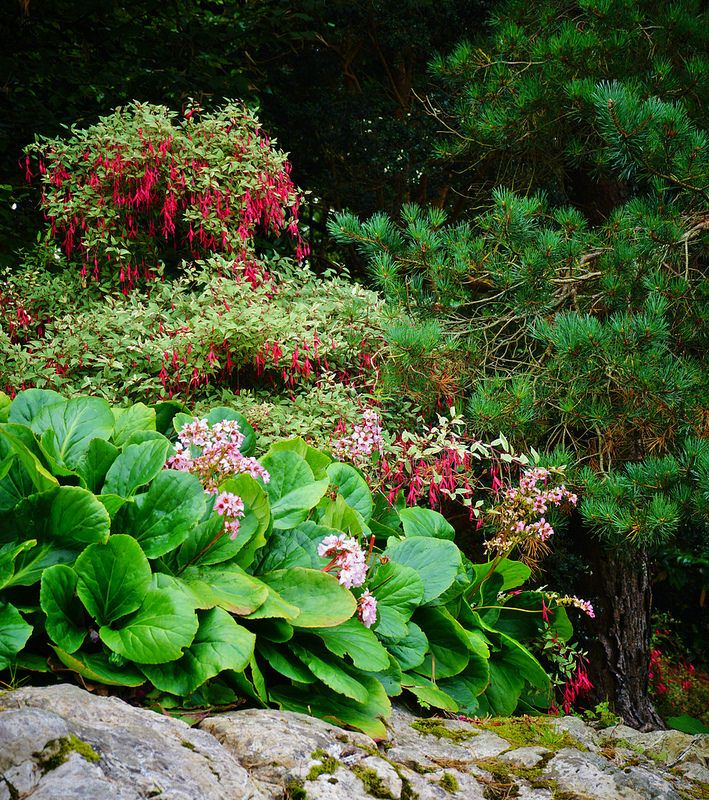 11 Best Rock Garden Images On Pinterest Plants For Shade Shade Garden Plants And Flower Beds