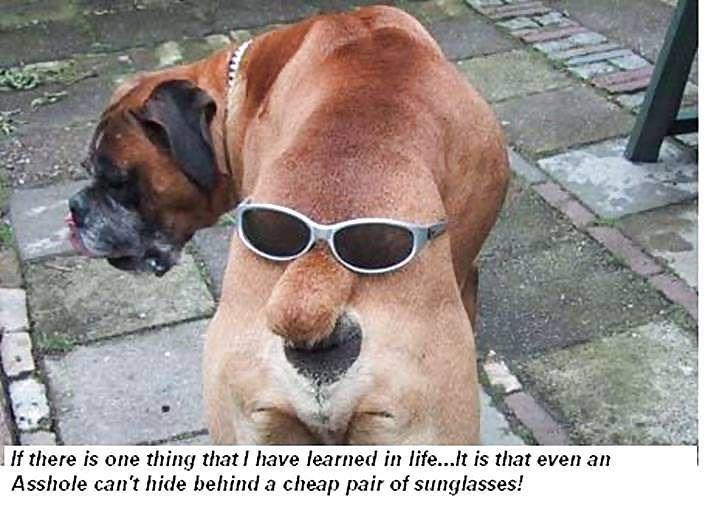 #dog #dogs #doggy #puppy #cute #cuteness #lifeinism #cutenessoverload #animal #animals #hashtagsgen #tail #animallove #animallover #doggylove #doggys #doggydaycare #doggymodelz #puppylove #puppypalace #puppyeyes #puppydog #puppys #puppyface #puppygram #puppydogeyes #puppyproblems #puppysofinstagram #puppyoftheday #puppykisses by capitandol